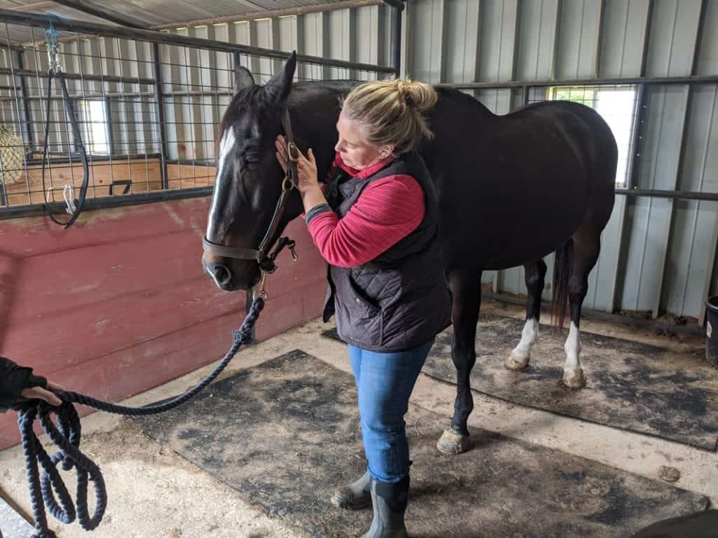 equine masseuse
