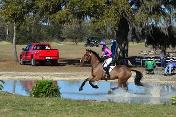 eventing horse dallas